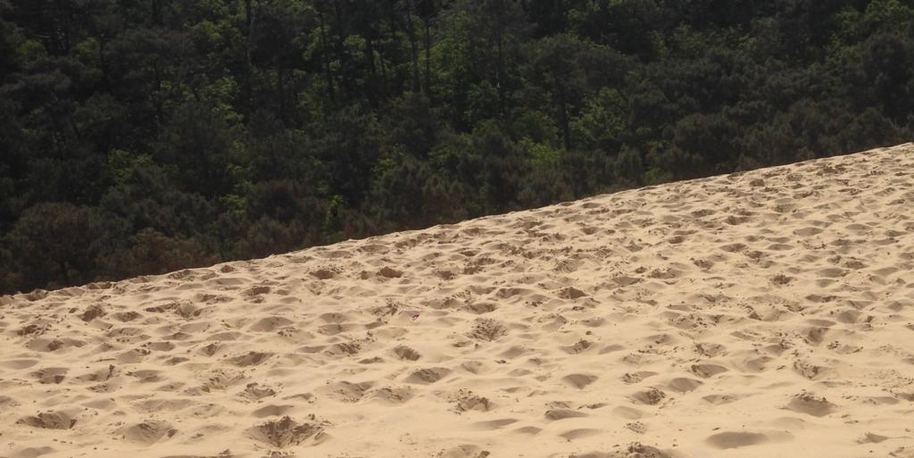 Sand & Trees